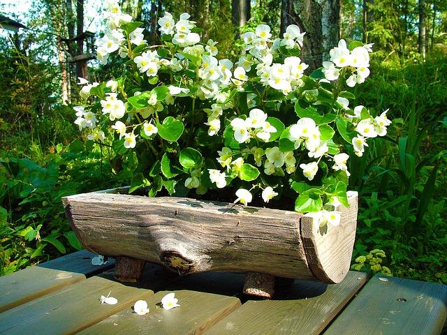 kwiaty w pieńku