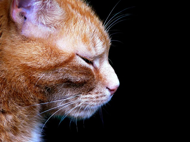 Kotu też należy się