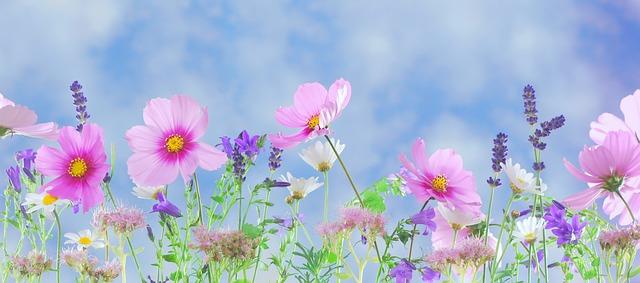 kwiaty na fototapecie